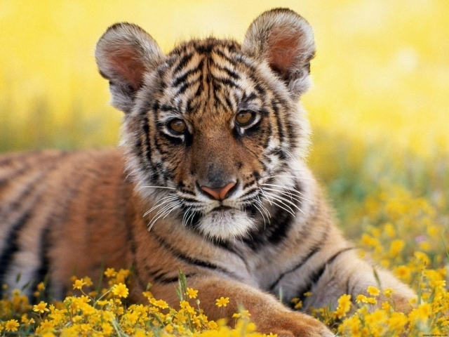 baby animal wallpaper. aby animals wallpapers.