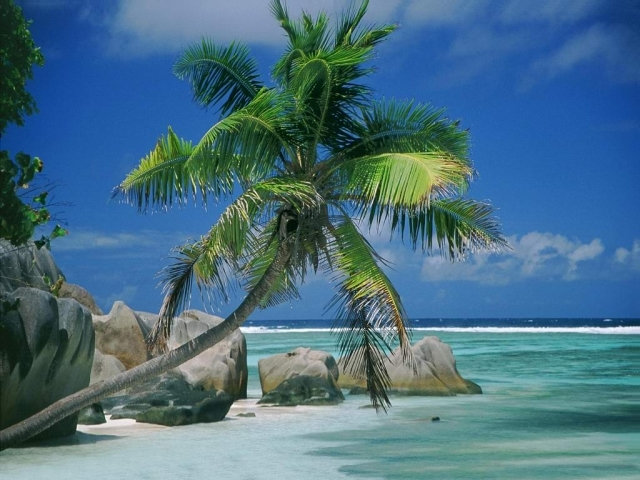 palm trees wallpapers. Beach with a Palm tree from best-wallpapers. Category : Beach