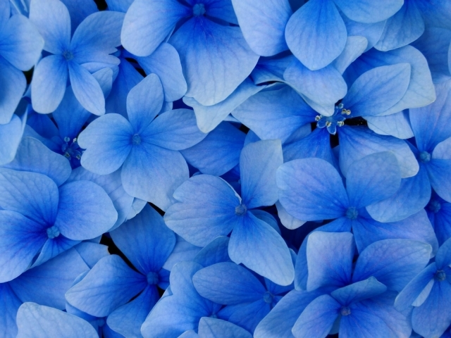 blue flowers, Wallpaper, Backgrounds, Androlib