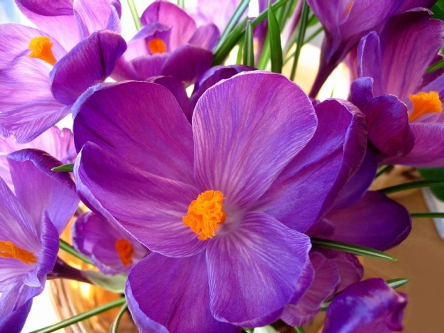 beautiful purple flower, wallpaper, backgrounds, androlib, Beautiful flower